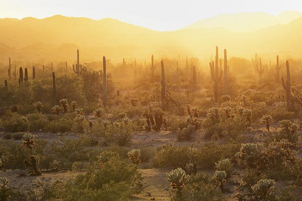 Desert Hiking 1.jpg
