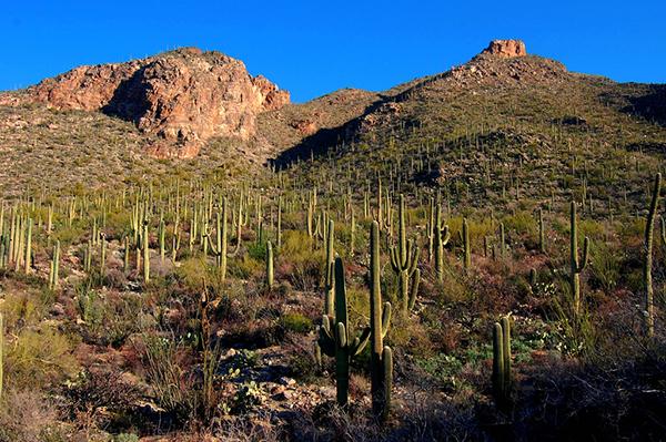Desert Hiking Tucson  1.jpg
