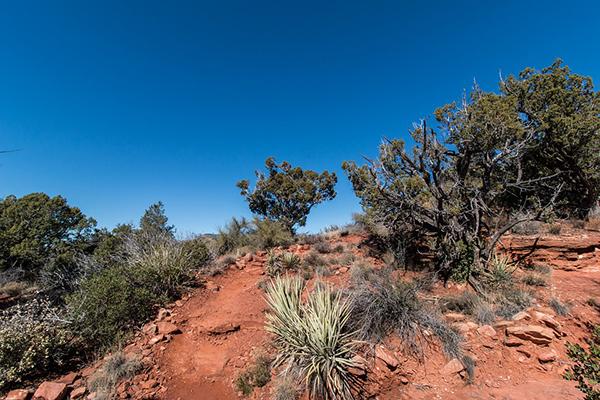 Desert Hiking.jpg