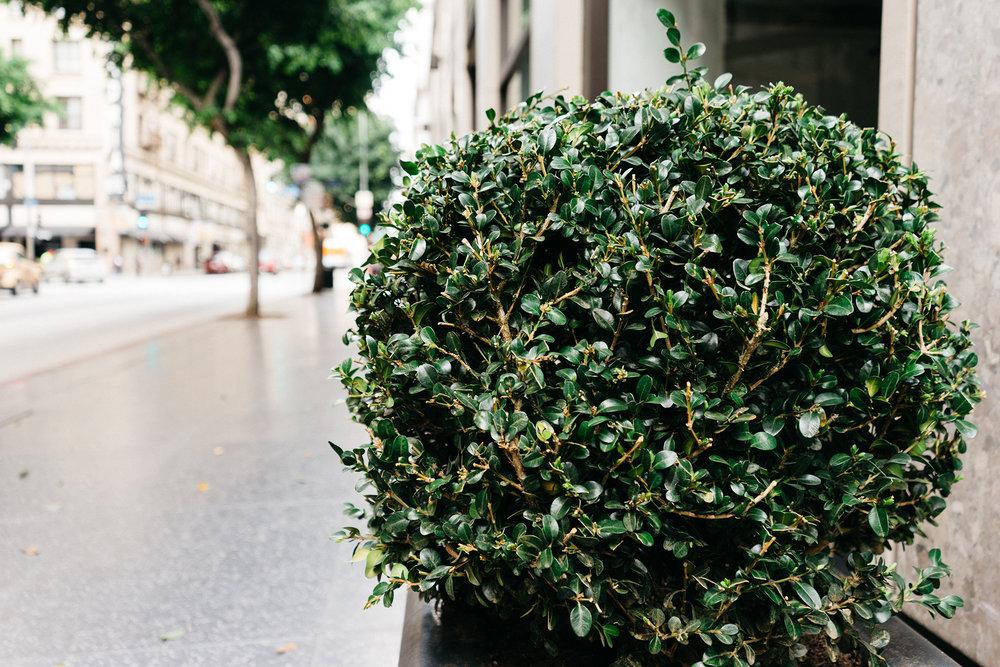bush-shrub-sidewalk.jpg