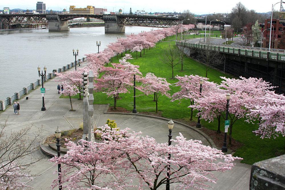 Waterfront_Park,_Portland.jpg
