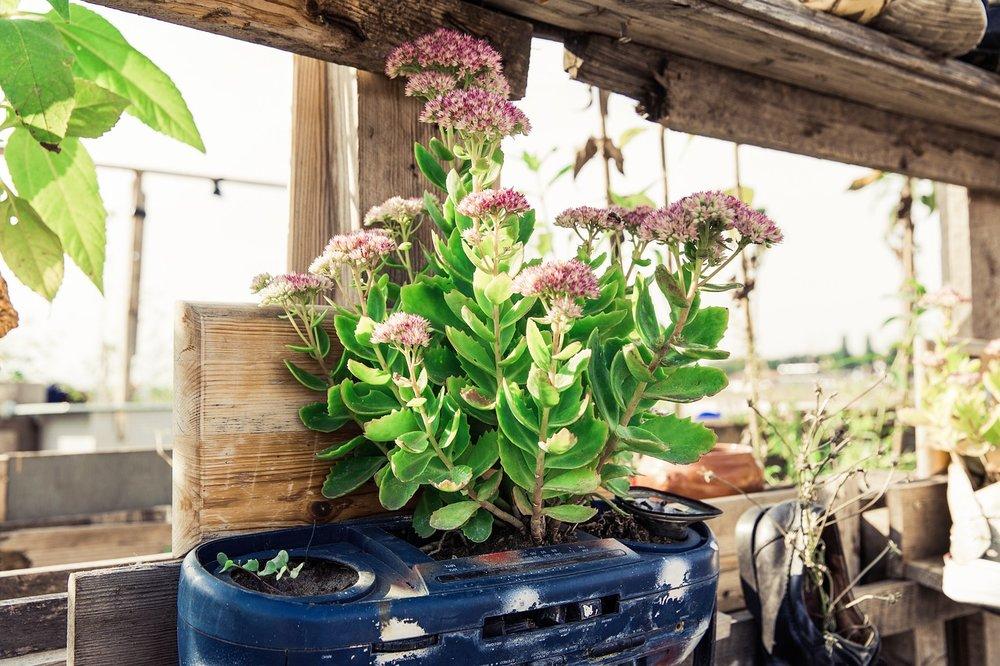 urban-gardening-1679950_1280.jpg