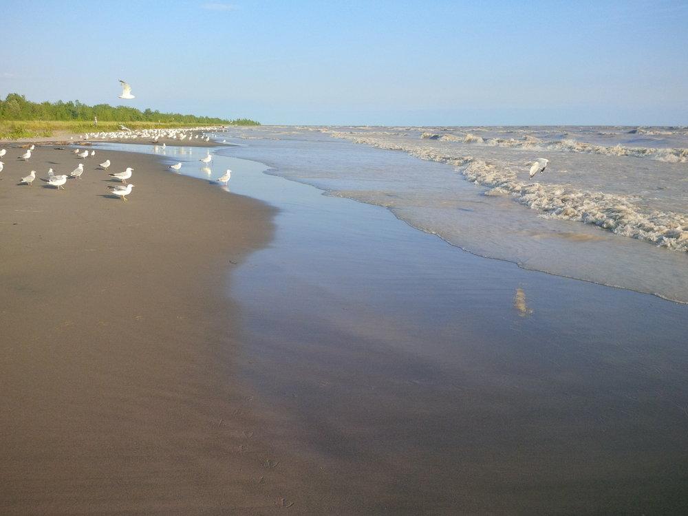 The_Gulls_on_Lake_Erie_-_panoramio.jpg