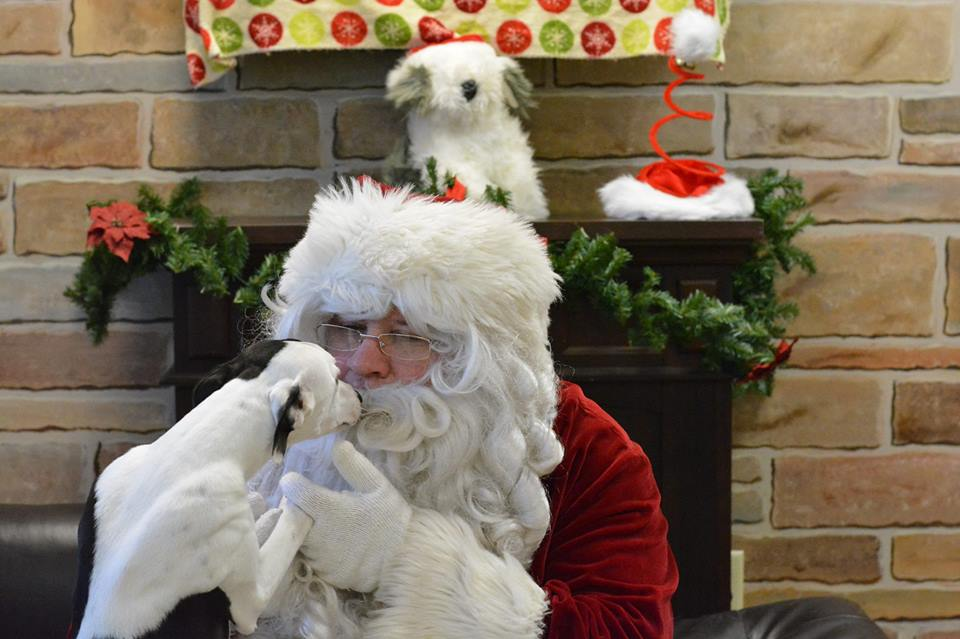 Indi's photo op at Elmbrook Humane Society's annual Photos with Santa Fundraiser