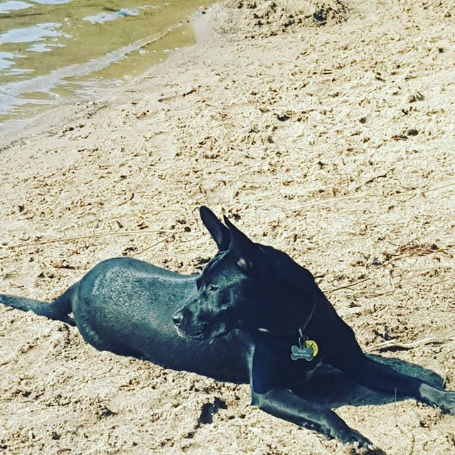 "We love client photo updates. ""Beautiful Nala sunbathing!"""