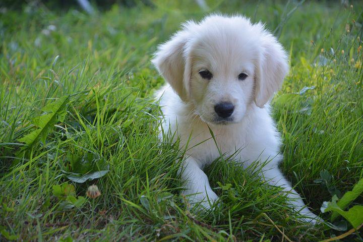 dog-2214578__480.jpg