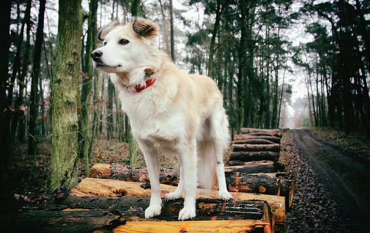 dog-3003339__480.jpg