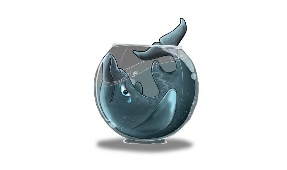 DolphinNoBG2.jpg