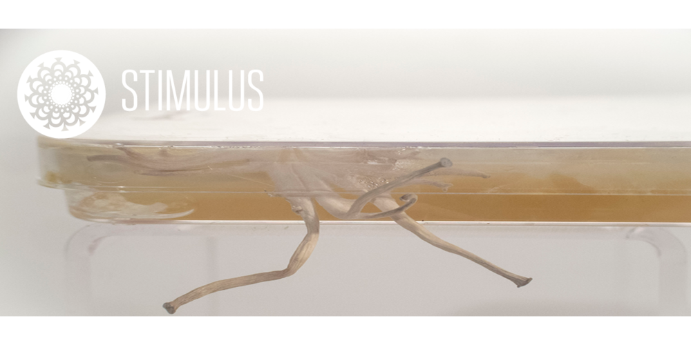 The perception and response to the  Dimensions  of life.  This is our   Stimulus   Collection.