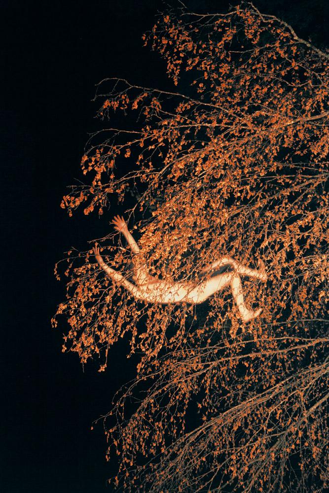 Orange Wood,  2011