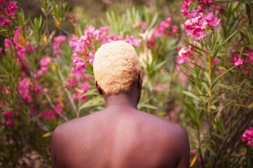 Blonde Oleander,  2013