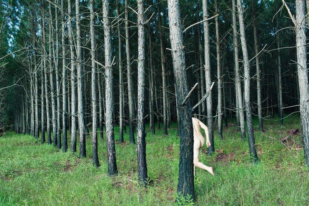 Tree (Procession),  2013