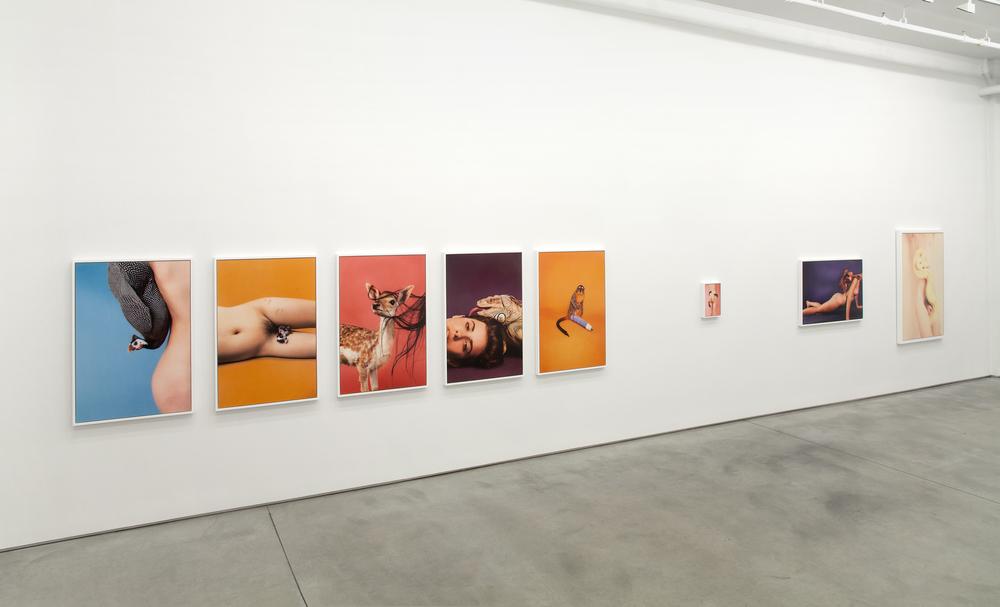 Animals, Team Gallery NYC, 2012