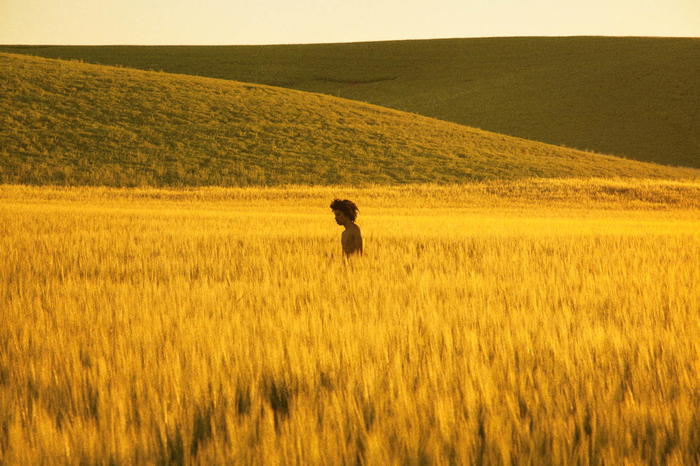 Golden Grassland,  2013