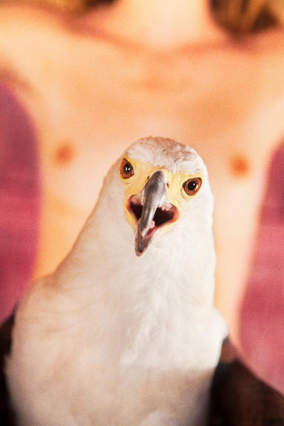 Bald Eagle (Pink),  2012