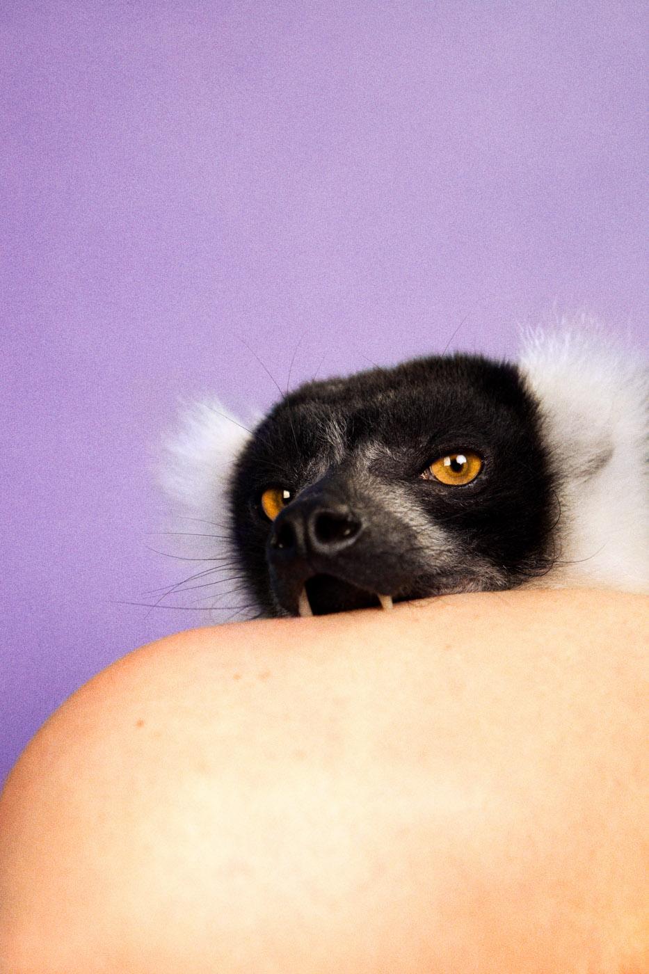 Lemur (Lilac),  2012