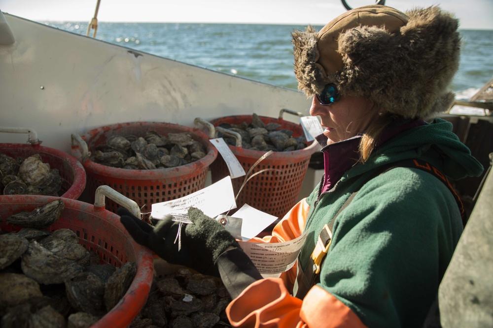 carol tagging oysters.jpg