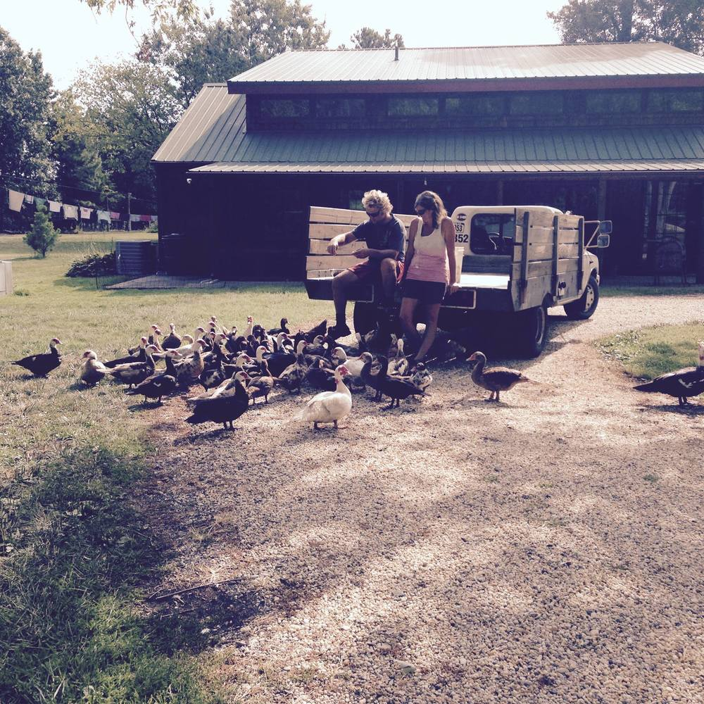 feeding ducks.jpg