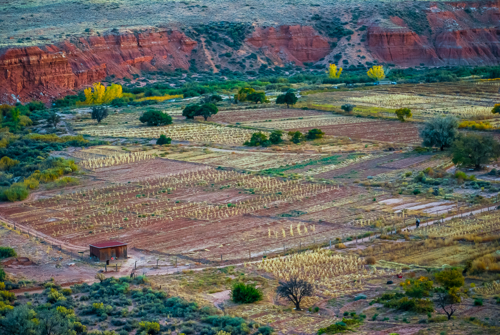 Hopi Cornfields in Automn Evening Light