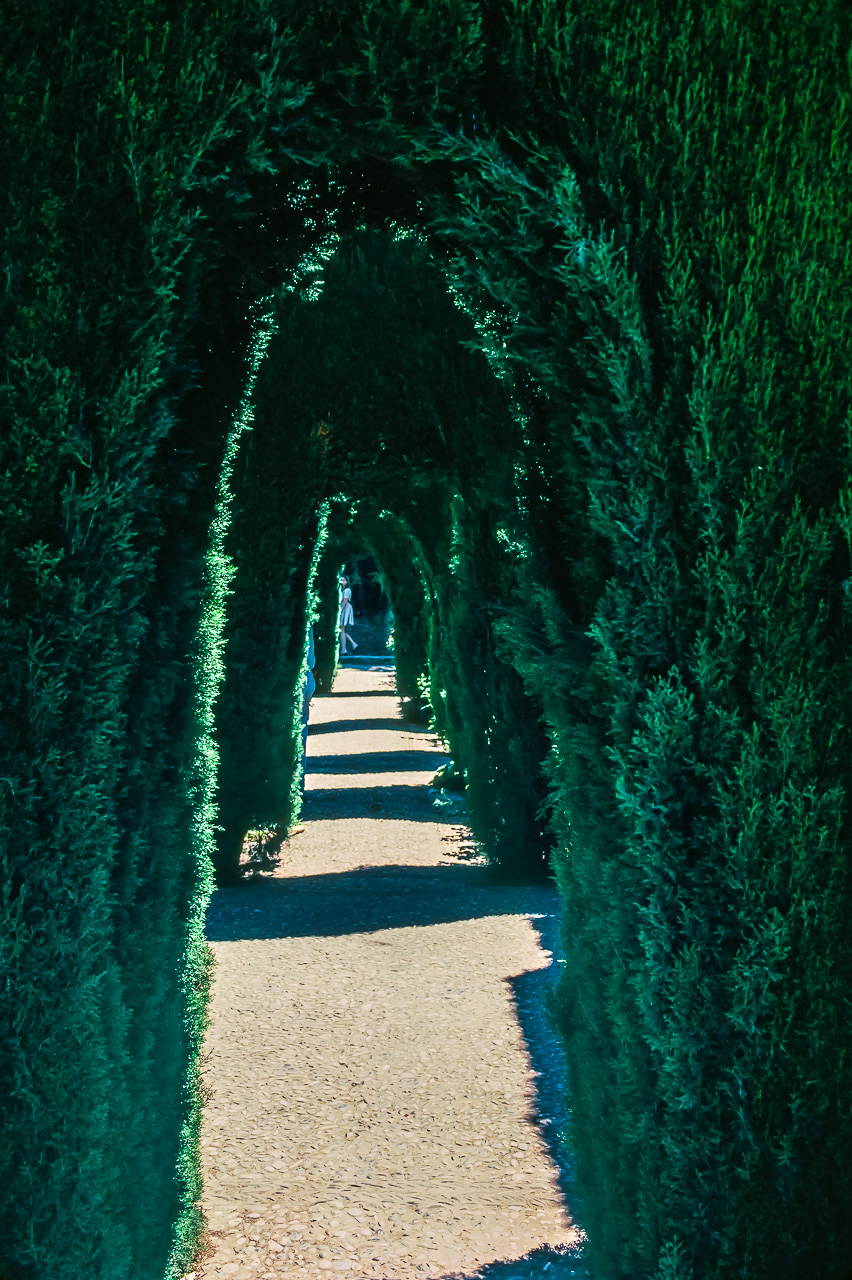 Sculpted Hedge Passage, Alhambra Palace, Grenada, Spain