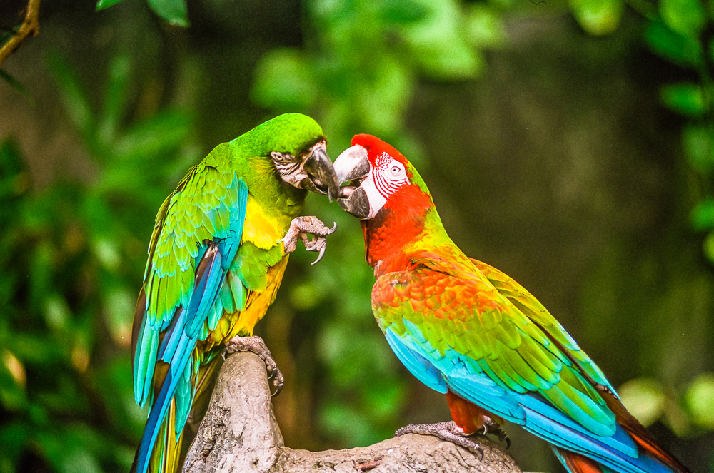 Parrots: Natural Paintings