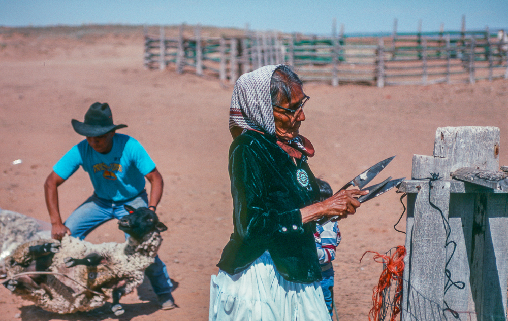 As Shima Sharpens her Shears, her Son Leo Lifts the Sheep into Place