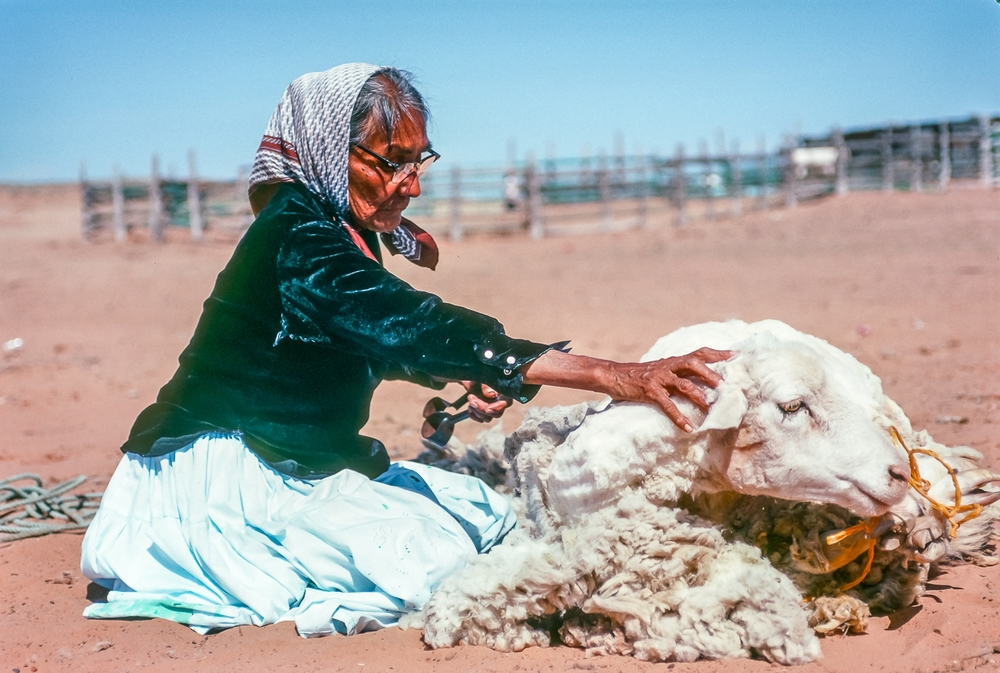 Shima, Master Rug Weaver, Shears Her Own Sheep