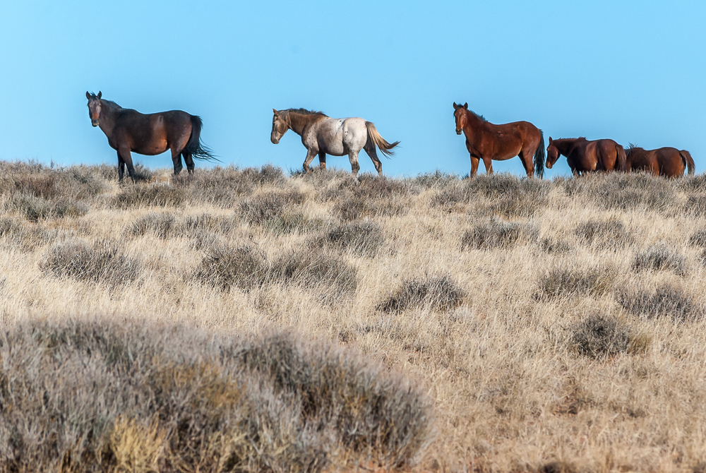 Wild Horses Running Free, Navajo Nation