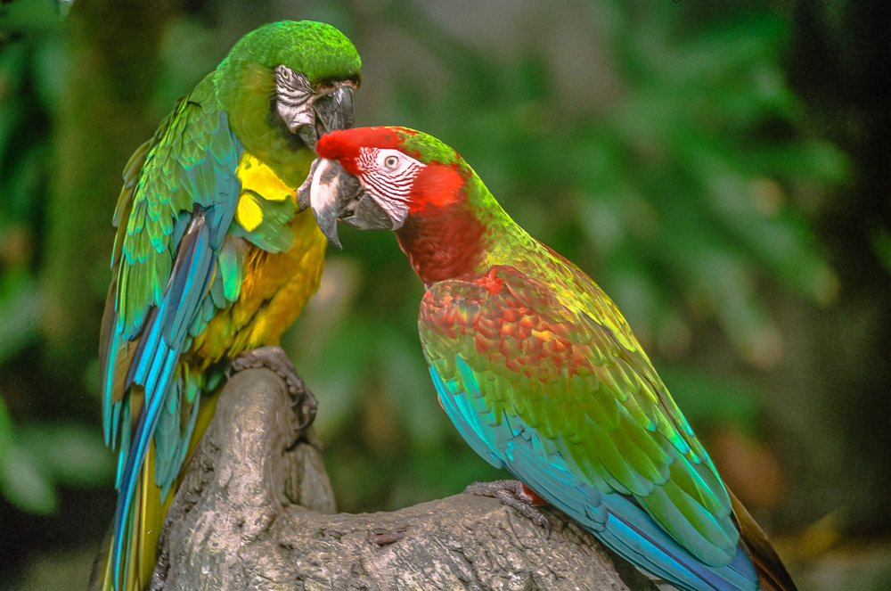 Parrots: Winged Paintings