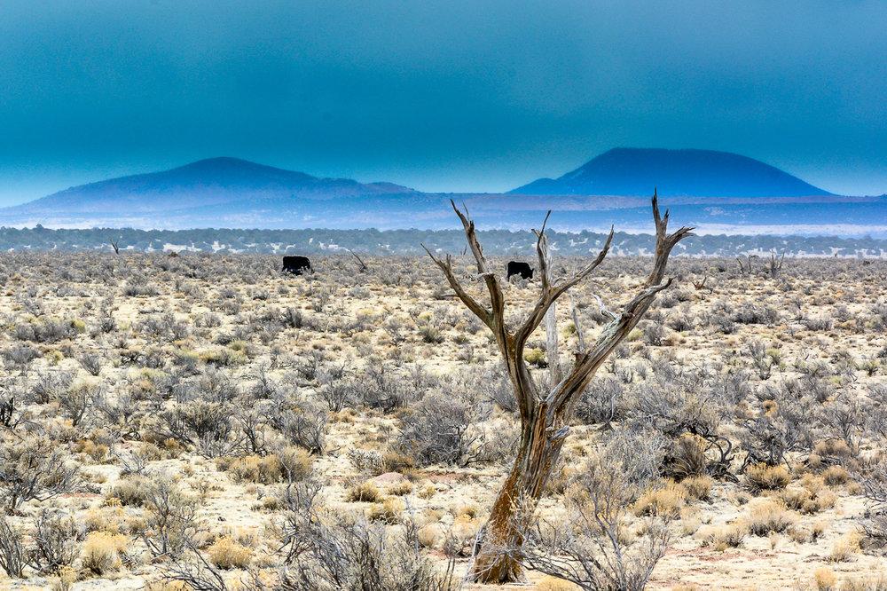 Jones_T.Landscape-8575.jpg