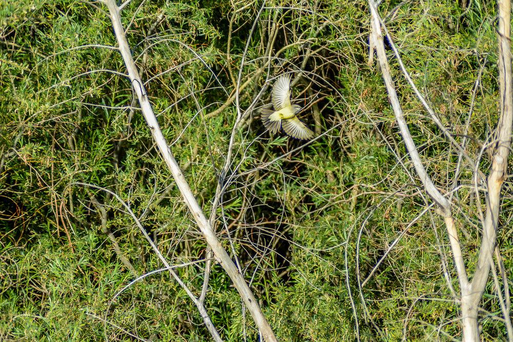 Birds.Jones_T.--3033.jpg