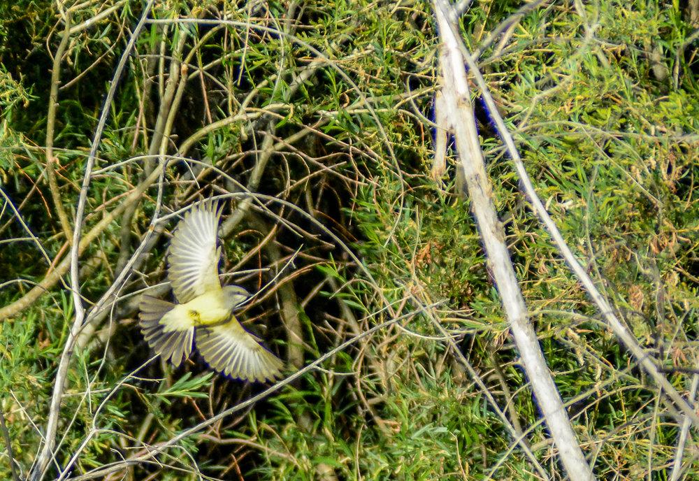 Birds.Jones_T.--3033-2.jpg