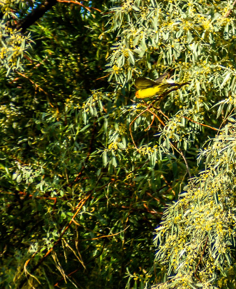 Birds.Jones_T.--2247-2.jpg