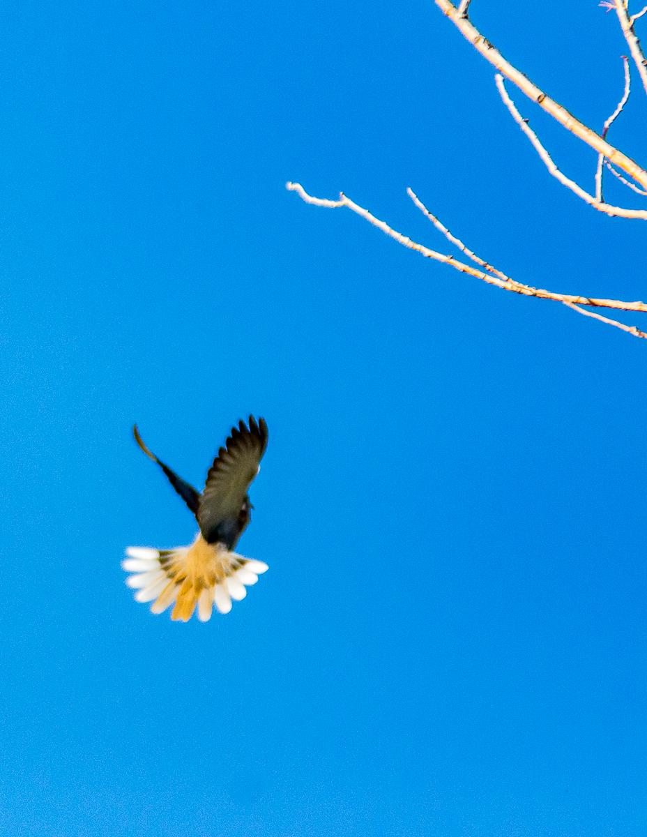 Birds.Jones_T.--1104.jpg