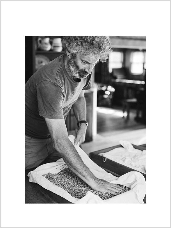 Sandor periodically checking and re-distributing the koji. Here on barley. We used the barley Koji for making Miso - and Rice Koji for Sake.