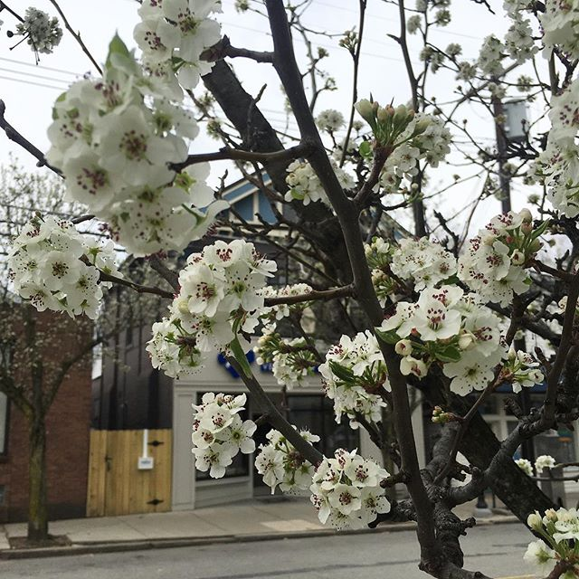 So grateful for Spring!! It has finally arrived here in Pittsburgh, meaning I get to spend my days looking at these beautiful blooming trees while editing and putting together weekly Social Media plans for clients. Every day I get to help people hit their goals and I ❤️ it! What goals are you reaching for?! Tell me below 👇 . . . #goals❤️ #goalsetter #socialmediamanager #socialmediacoach #smm #socialmedia #entrepreneur #goalsetting #goalgetter #cindersmedia #springishere #springisintheair #springishere🌸 #springisback #blooming #editor #producerslife