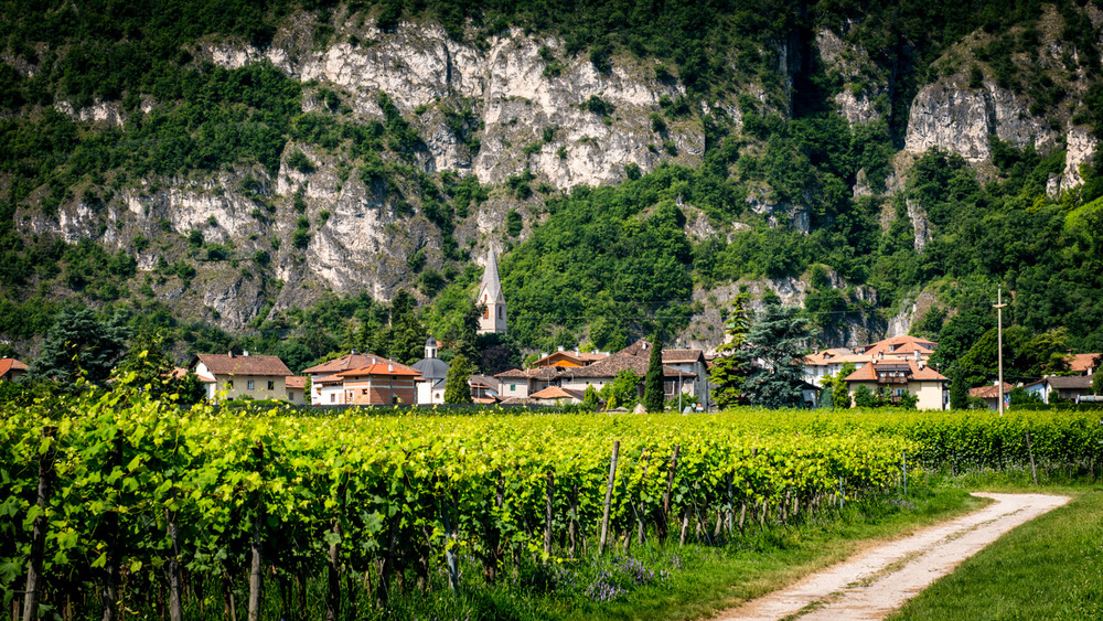 Italy : Alto Adige : Strolling through vineyards in Margreid