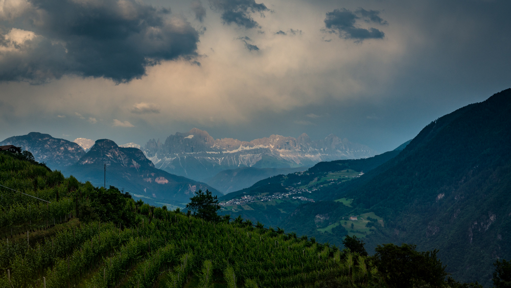 Italy : Alto Adige : Vineyards outside of Bolzano