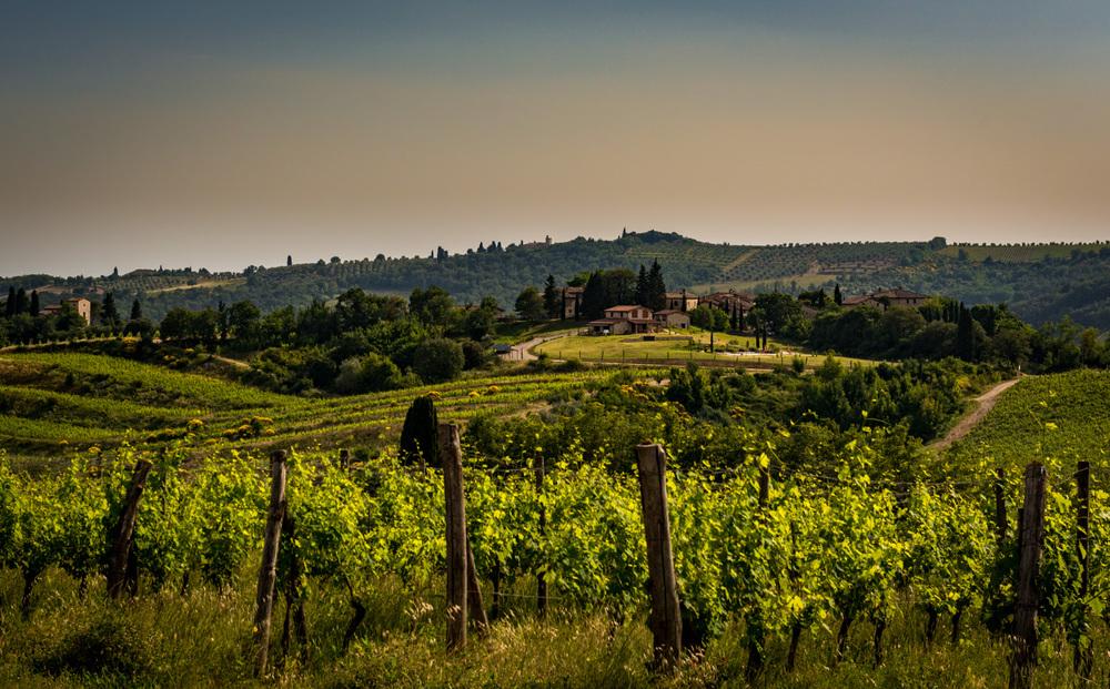 Italy : Tuscany : Gaiole in Chianti Classico
