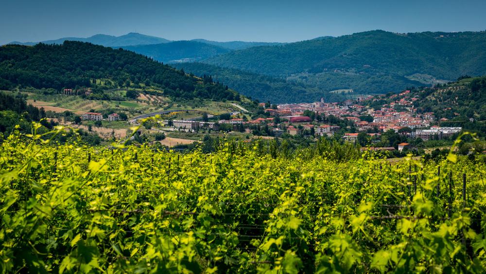Italy : Tuscany : Chianti Rufina