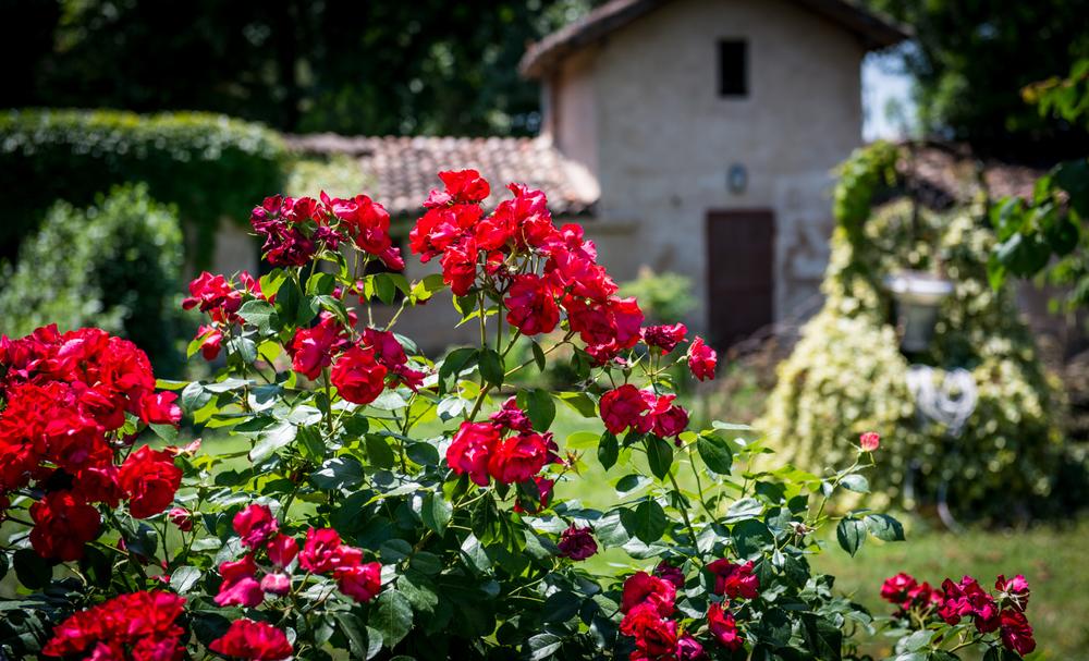 Italy : Emilia-Romagna : Scenery in Modena