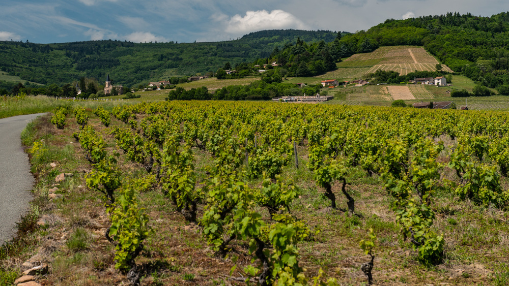 France : Beaujolais : Les Chanoriers