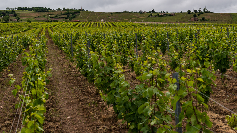 France : Beaujolais : Juliénas