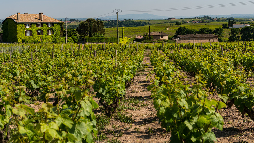 France : Beaujolais : Morgon