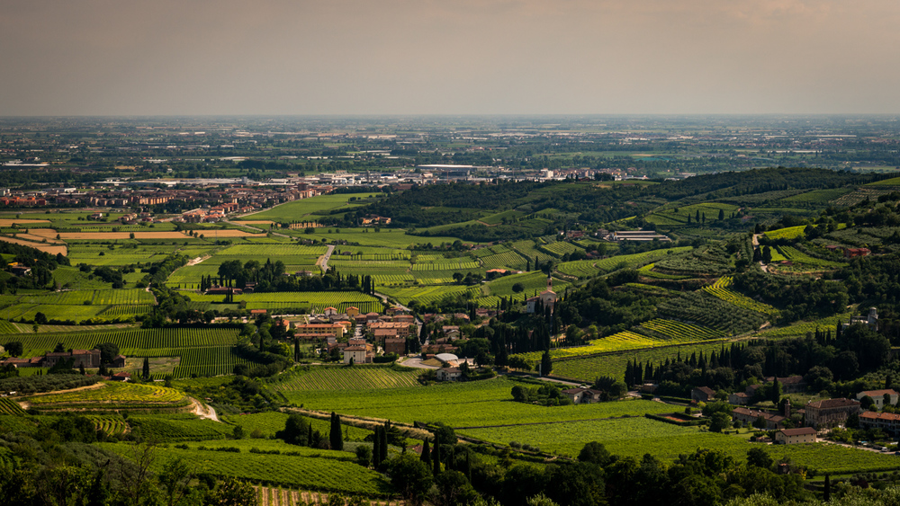 Italy : Veneto : Valpolicella production zone in and around Lavagno
