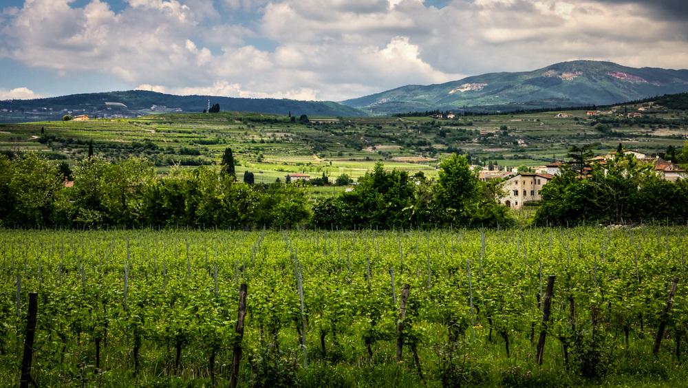 Italy : Veneto : Brigaldara's vineyards, San Pietro in Cariano