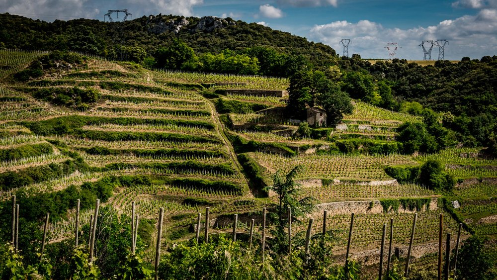 France : Northern Rhone : Chaillot vineyard in Cornas