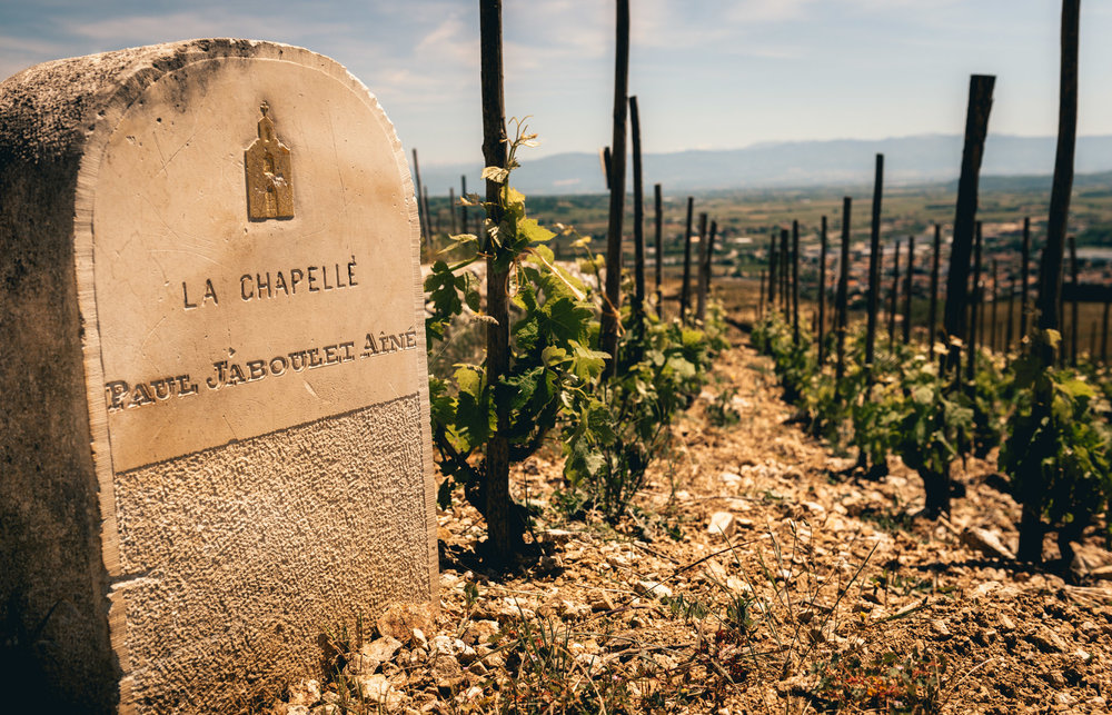 France : Northern Rhone : l'Ermite vineyard