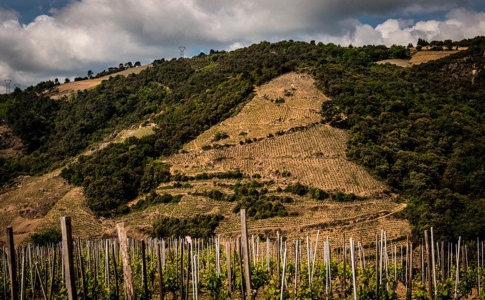 France : Northern Rhone : Reynard vineyard in Cornas