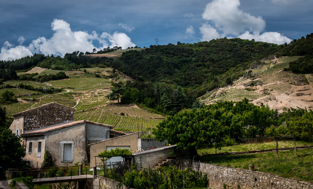 France : Northern Rhone : Cornas